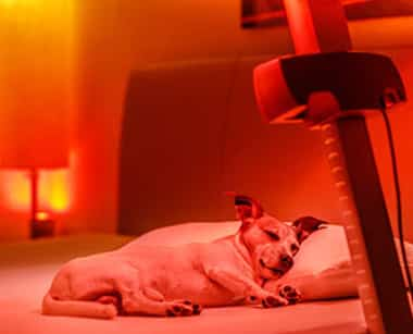 Red Light Therapy Articles